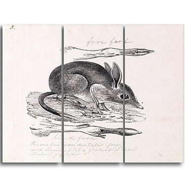 Designart Gerard Krefft, Pig-footed Bandicoot Canvas Art Print, 3 Panels, (PT4432-3P)