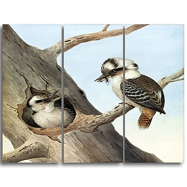 Designart Neville HP Cayley, Laughing Kookaburra Canvas Art Print, 3 Panels, (PT4748-3P)