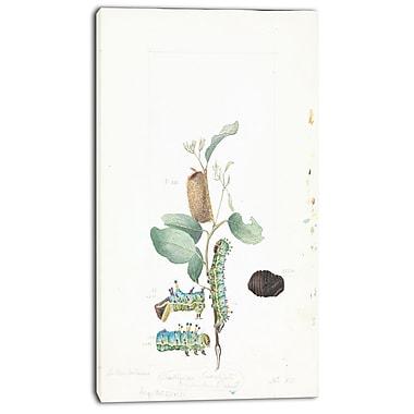 Designart Arthur BartholomewEmperor Gum Moth Canvas Art Print, 3 Panels, (PT4156-20-40)