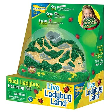 Insect Lore Ladybug Land (ILP2100)