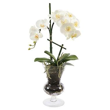 Jane Seymour Botanicals Phalenopsis in Glass Vase