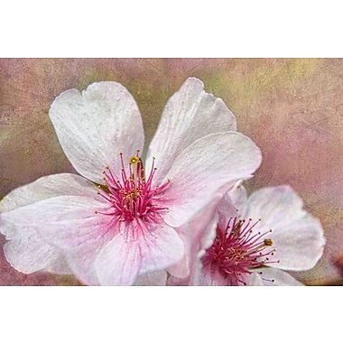 Marmont Hill 'Cherry Blossoms' by Theo Painting Print on Wrapped Canvas; 12'' H x 18'' W