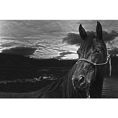 Marmont Hill 'Nightwatch' by Maggie Dee Painting Print on Wrapped Canvas; 20'' H x 30'' W