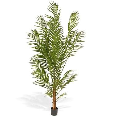 National Tree Co. Areca Palm Tree in Pot