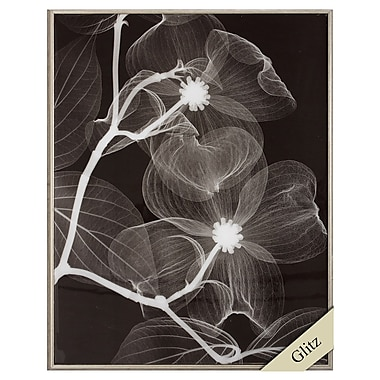 Propac Images Dogwood Blossoms Negative Framed Graphic Art