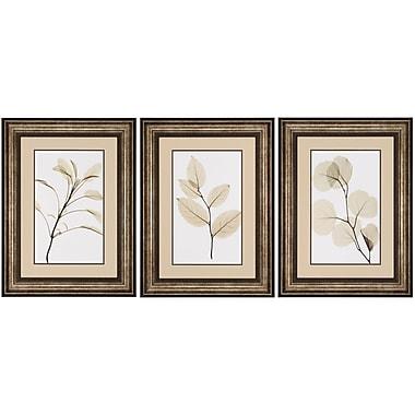Propac Images Sage Salal Eucalypt 3 Piece Framed Graphic Art Set