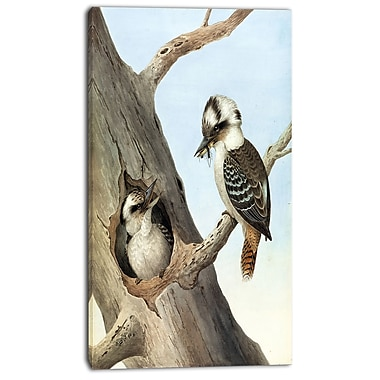 Designart Neville HP Cayley, Laughing Kookaburra Canvas Art Print, 3 Panels, (PT4748-20-40)