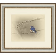 Ashton Wall D cor LLC Birds 'Blue Bird' Framed Photographic Print