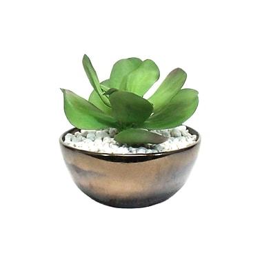 Dalmarko Designs Succulent in Bronze Ceramic Bowl