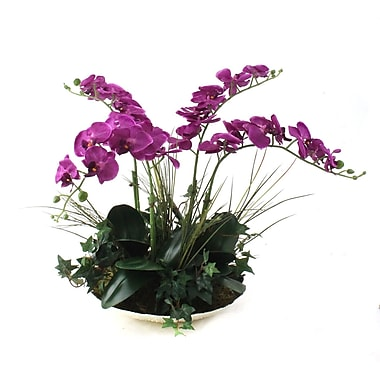 Dalmarko Designs Orchids in Decorative Bowl; Fuchsia