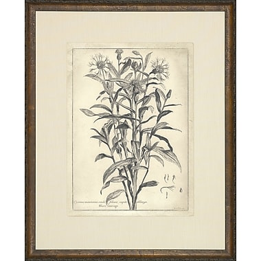 Art Virtuoso Etched Florals Framed Painting Print
