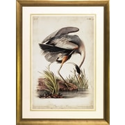 Art Virtuoso Audubon Herons by John James Audubon Framed Painting Print