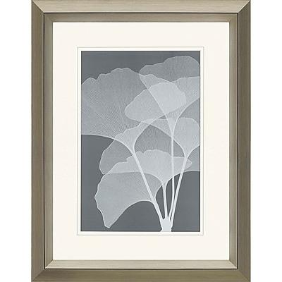 Paragon Gingkos I by Steven Meyers Framed Graphic Art