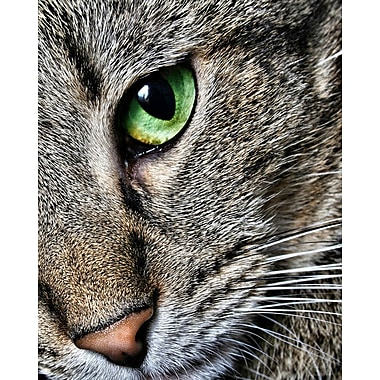 Wallhogs Batie Max Close Up Poster Wall Mural; 60'' H x 48'' W