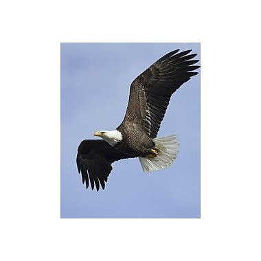 Wallhogs Eagle I Wall Mural; 48'' H x 38'' W