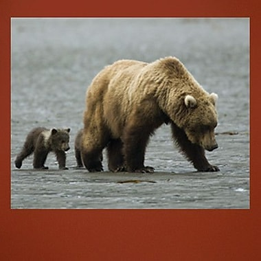 Wallhogs Bear II Wall Mural; 27.5'' H x 36'' W