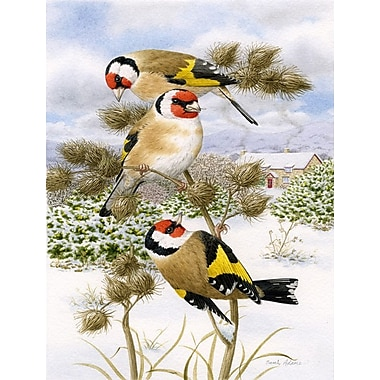 Caroline's Treasures European Goldfinch 2-Sided Garden Flag