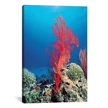 iCanvas Marine and Ocean Red Coral Photographic Print on Canvas; 40'' H x 26'' W x 0.75'' D