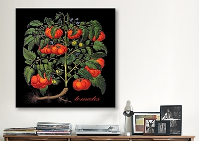 iCanvas ''Tomates'' by Mindy Sommers Graphic Art on Canvas; 26'' H x 26'' W x 0.75'' D