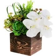 Dalmarko Designs Orchid and Succulent in Wooden Planter