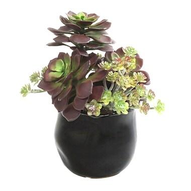 Dalmarko Designs Succulent Mix in Pot