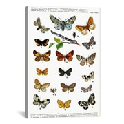 iCanvas Animal European Butterflies Graphic Art on Canvas; 40'' H x 26'' W x 1.5'' D