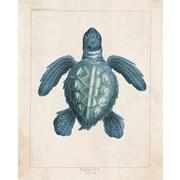 Marco Fine Arts Sea Turtle Cerulean Framed Graphic Art; 30'' H x 20'' W x 2'' D