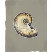 Marco Fine Arts Seashells Camel Framed Graphic Art; 30'' H x 20'' W x 2'' D