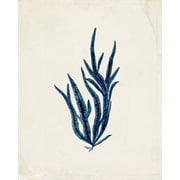 Marco Fine Arts Seaplants Saphire Framed Graphic Art; 20'' H x 16'' W x 2'' D