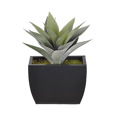House of Silk Flowers Artificial Frosted Green Succulent Desk Top Plant in Decorative Vase