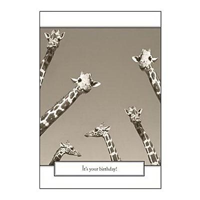 Hallmark Birthday Greeting Card, It's Your Birthday (0295QUB2428)