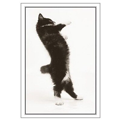 Hallmark Birthday Greeting Card, Let the Birthday Boogie Begin! (0250QUB2438)