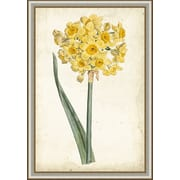 Ashton Wall D cor LLC In Bloom 'Curtis Narcissus I' Framed Painting Print by