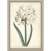 Ashton Wall D cor LLC In Bloom 'Curtis Narcissus II' Framed Painting Print by