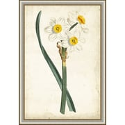 Ashton Wall D cor LLC In Bloom 'Curtis Narcissus III' Framed Painting Print by