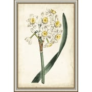 Ashton Wall D cor LLC In Bloom 'Curtis Narcissus IV' Framed Painting Print by