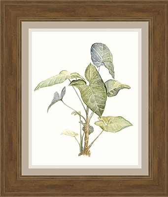 Ashton Wall D cor LLC In Bloom 'Tropical Watercolor Leaves IV' Framed Painting Print