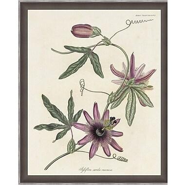 Ashton Wall D cor LLC In Bloom 'Lavender Blooms II' Framed Painting Print