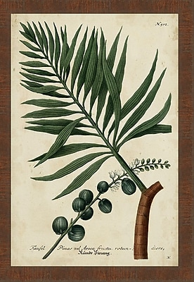 Ashton Wall D cor LLC In Bloom 'Vintage Tropicals IV' Framed Painting Print