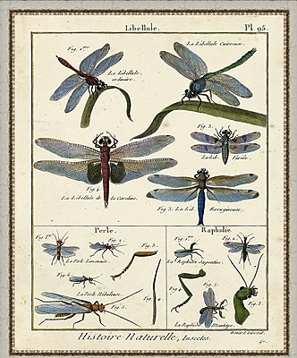 Ashton Wall D cor LLC In Bloom 'Histoire Naturelle Insects I' Framed Painting Print