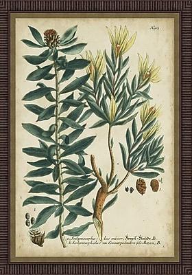 Ashton Wall D cor LLC In Bloom 'Weinmann Foliage & Fruit IV' Framed Painting Print