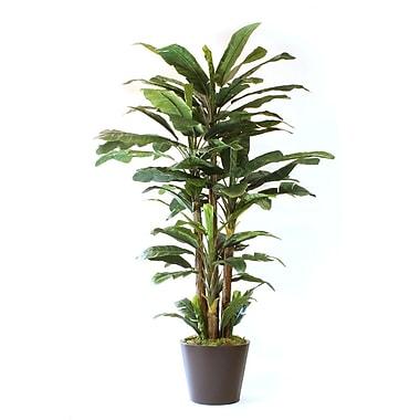 Dalmarko Designs Lush Banana Floor Plant in Planter