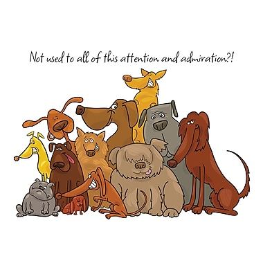 Millbrook Not Used to Attention Greeting Card, Dogs, (23936), 18/Pack