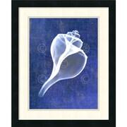 Amanti Art Bert Myers 'Channelled Whelk (indigo)' Art Print 18 x 22 in. Black Wood Frame (DSW1418543)