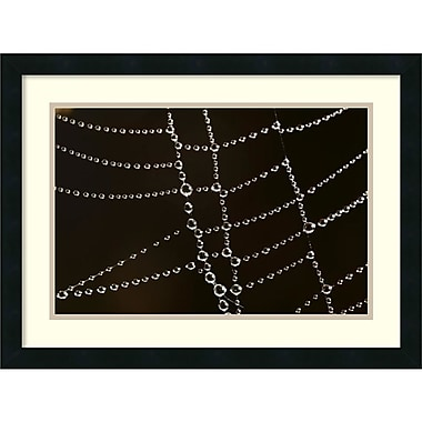 Amanti Art Cyril Ruoso Spider Web with Beads of Dew, France Art Print, 24
