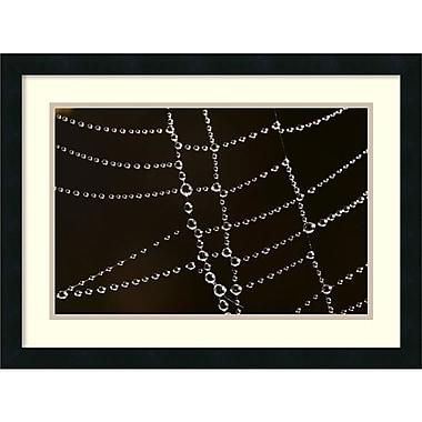 Amanti Art ? Impression encadrée « Spider Web with Beads of Dew » par Cyril Ruoso, France, 24 x 18 po, cadre noir (DSW1418492)