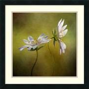 Amanti Art Mandy Disher 'Echo' Art Print 22 x 22 in. Satin Black Wood Frame (DSW1418659)