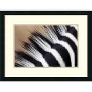 "Vincent Grafhorst 'Zebra Mane, Khama Rhino Sanctuary, Serowe, Botswana' Framed Art Print 26"" x 20"" (DSW1418966)"