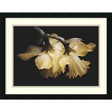 Amanti Art David Lorenz Winston Sunning Daffodils Framed Art Print, 26