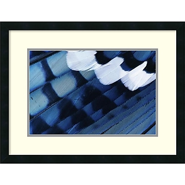 Amanti Art Rolf Nussbaumer Blue Jay Feathers, Texas Framed Art Print, 26
